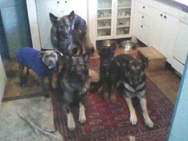 kitchen dogs1