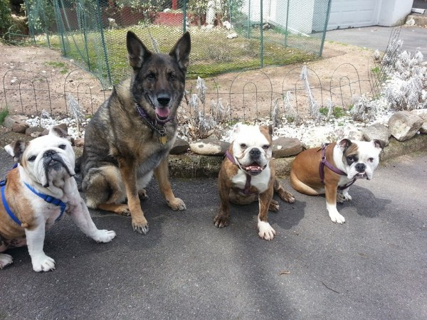 left to right - goomba, goonie, holly and valentina