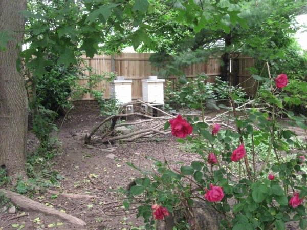 our beautiful backyard