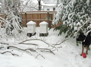 feb.2015 hives